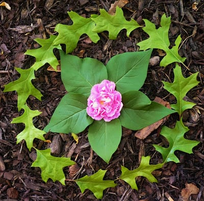 Mandala con hojas y una flor